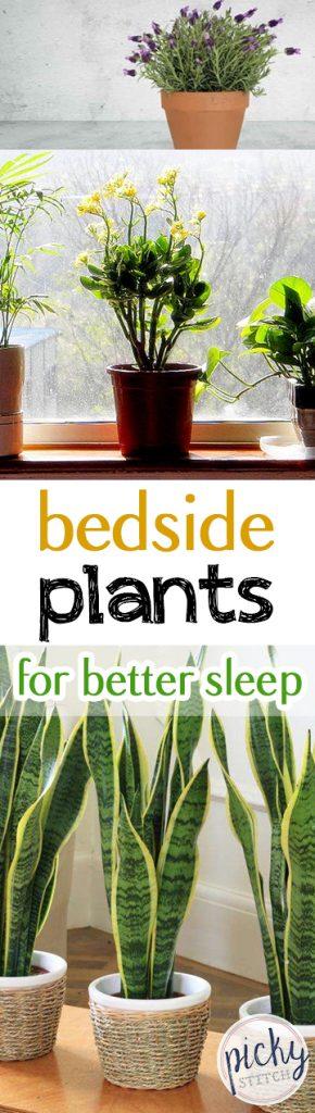 Bedside Plants for Better Sleep| Indoor Gardening, Indoor Gardening TIps and tricks, Gardening, Bedside Gardening, Sleep Hacks #SleepHacks #IndoorGarden