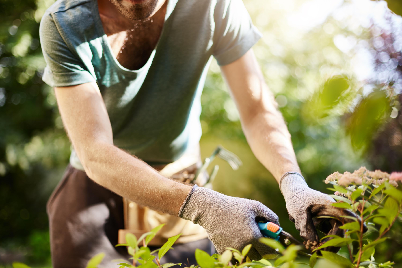 garden hacks | simple garden hacks | must know garden hacks | garden | gardening | garden tips | gardening tips